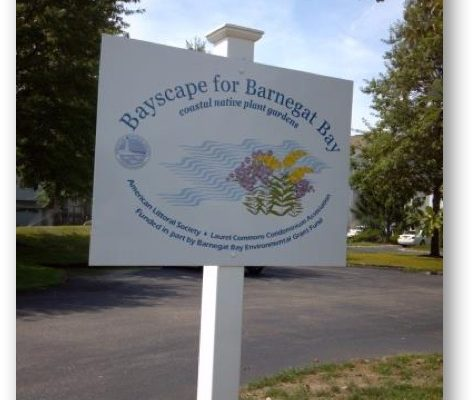 One of the sites involved in the award-winning #BarnegatBay #GreenInfrastructure Project was the Laurel Commons Homeowners Association in Toms River, New Jersey where American Littoral Society and Princeton Hydro converted a failing conventional detention basin to a naturalized bioretention basin. They also replaced the conventional aesthetic landscape features with native garden beds.