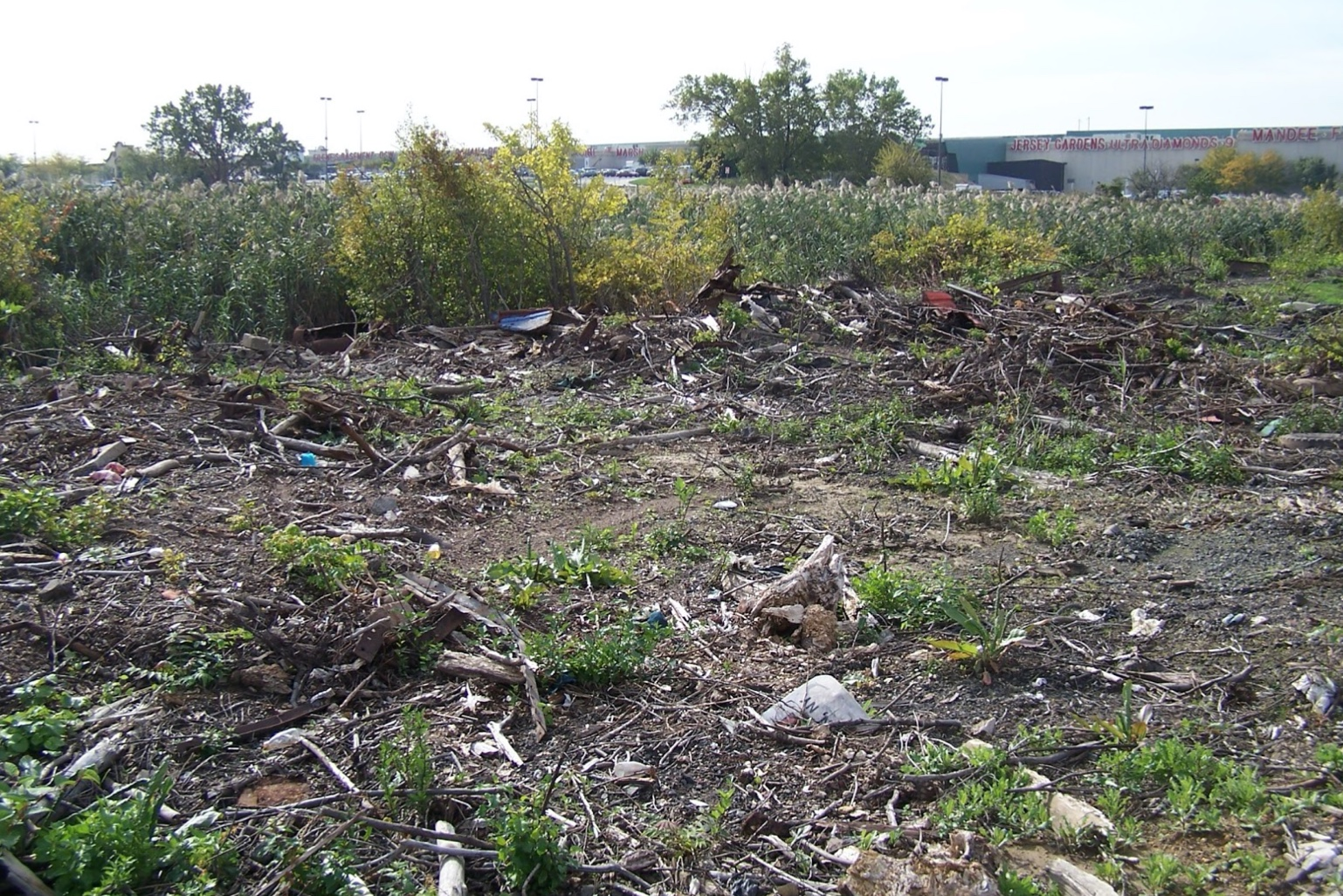 In 2004, Prologis hired Princeton Hydro to restore an 18-acre area adjacent to the Elizabeth Seaport Business Park, which a significantly disturbed and degraded mosaic of wetland and upland areas.