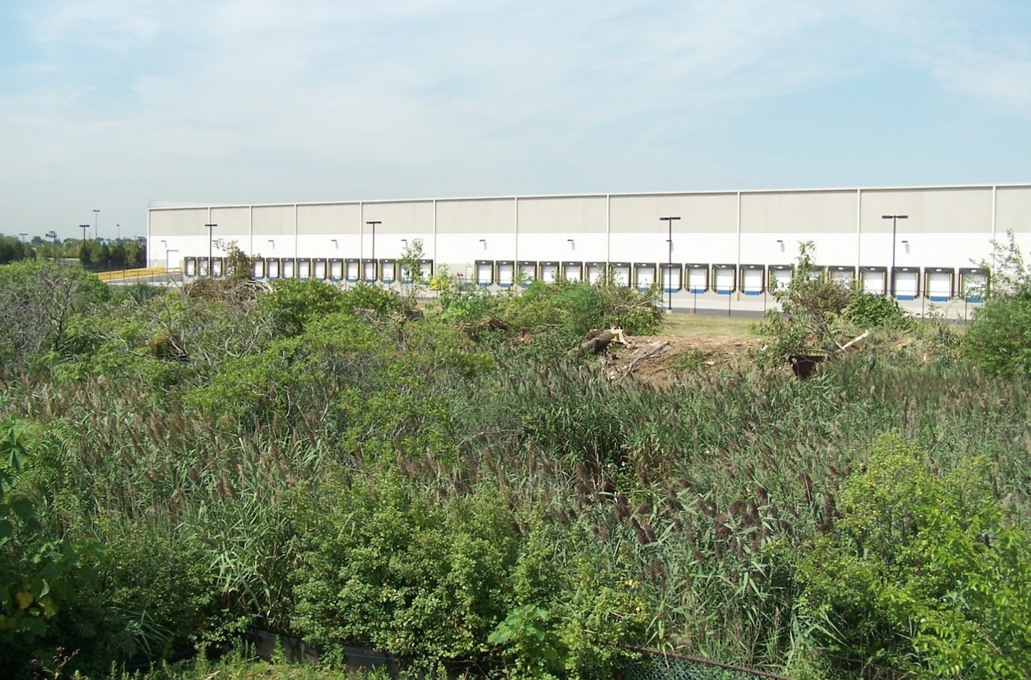The Elizabeth Seaport Business Park site was comprised of a monoculture of Phragmites australis, also known as Common Reed.