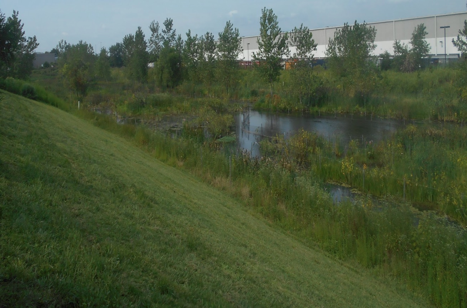The mitigation plan focused on enhancing the existing wetland by eradicating non-native-invasive plant species, like Phragmites, and establishing more diverse population of productive, native species with high ecological value.