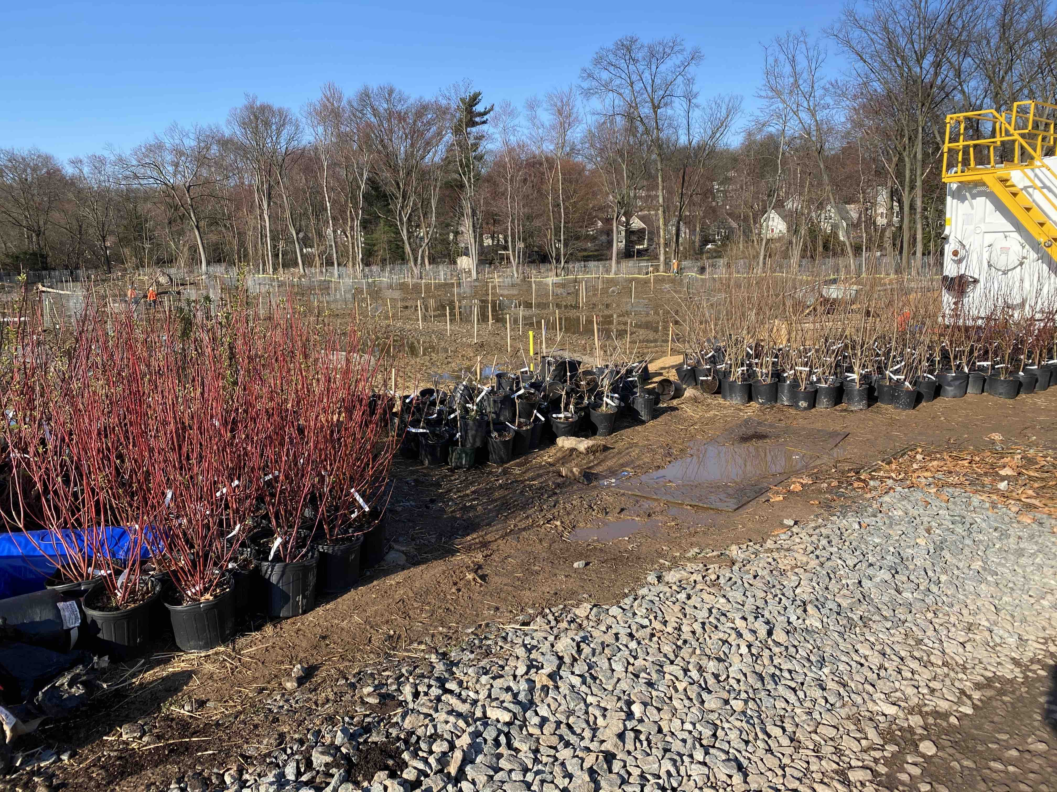 Removing invasive species and replacing them with native plants, shrubs and trees sets the stage for a flourishing native plant community year after year.