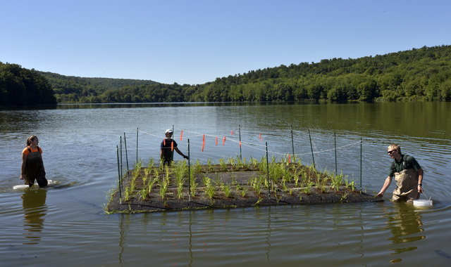 Nick Decker, PA State Parks Resource Manager, and Cory Speroff and Katie Walston of Princeton Hydro position a floating island of native plants in the lake at Frances Slocum State Park